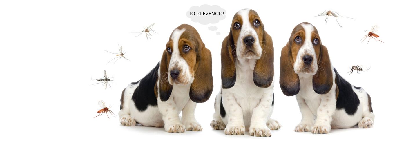 basset-hound-filariosi-e-leishmaniosi-prevenzione