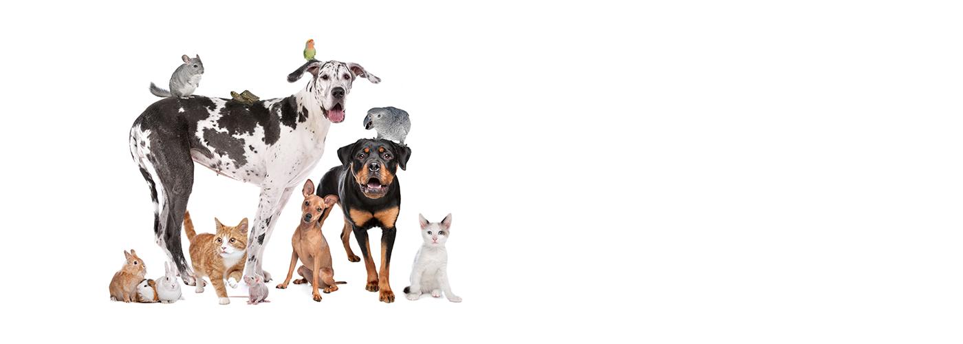 emergenza-covid-19-clinica-veterinaria-athena