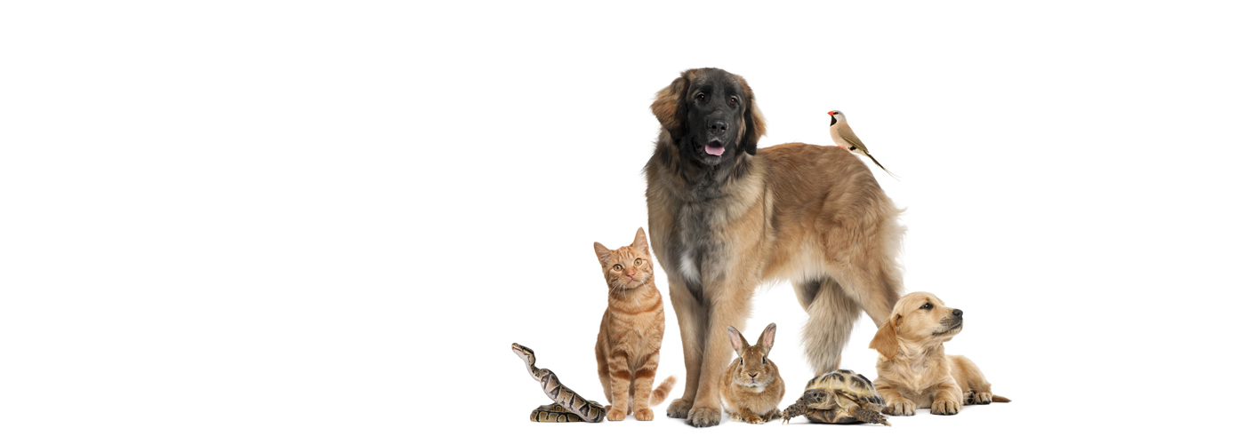 gruppo-di-pet-clinica-veterinaria-adler
