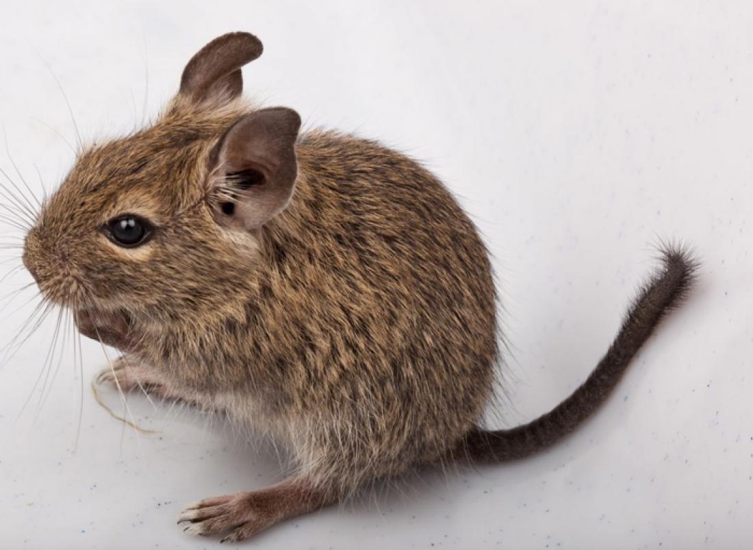 Ecologia e fisiologia del topo domestico