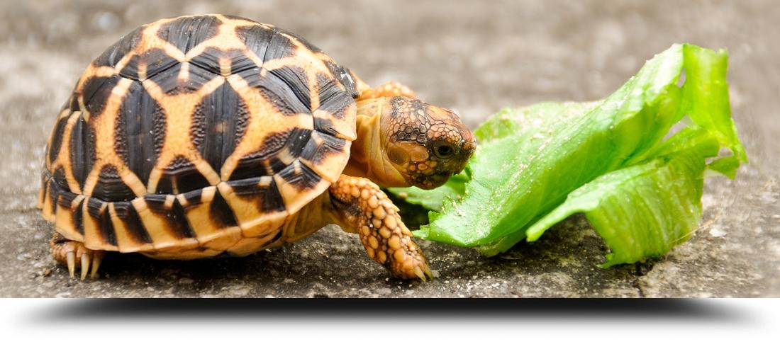 Tartarughe terrestri for Vaschetta tartarughe prezzo